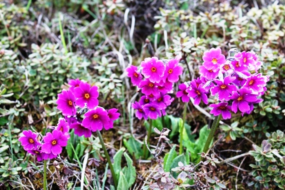 Wild Flowers that adorn the trail that abound.