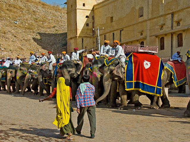 Elephant Ride At Amber