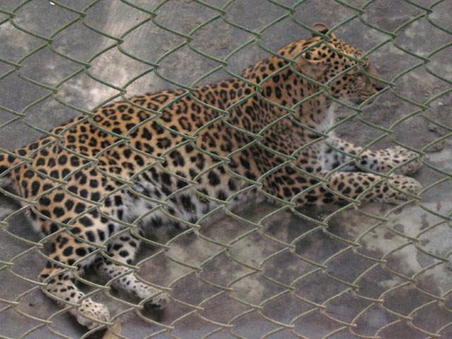 Zoological Garden- Darjeeling