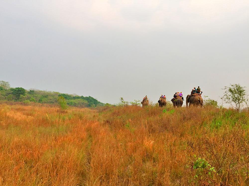 Evening View of Jungle Safari