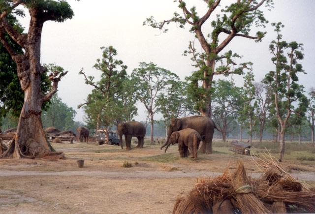 Chitwan Elephant Camp