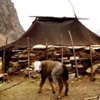 nomad_tent_laya_gasa