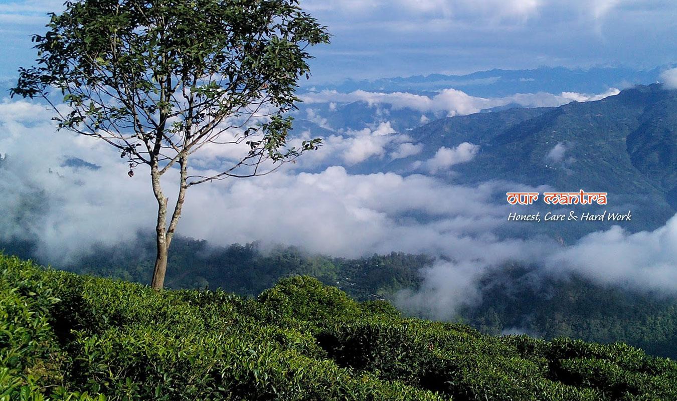 Heritage Darjeeling Dooars Tea Tour