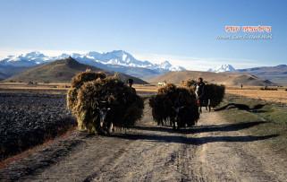 tibet-tingri