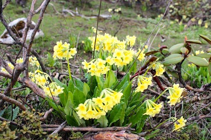 Wild Flower during Spring