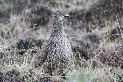Birding in Bhutan
