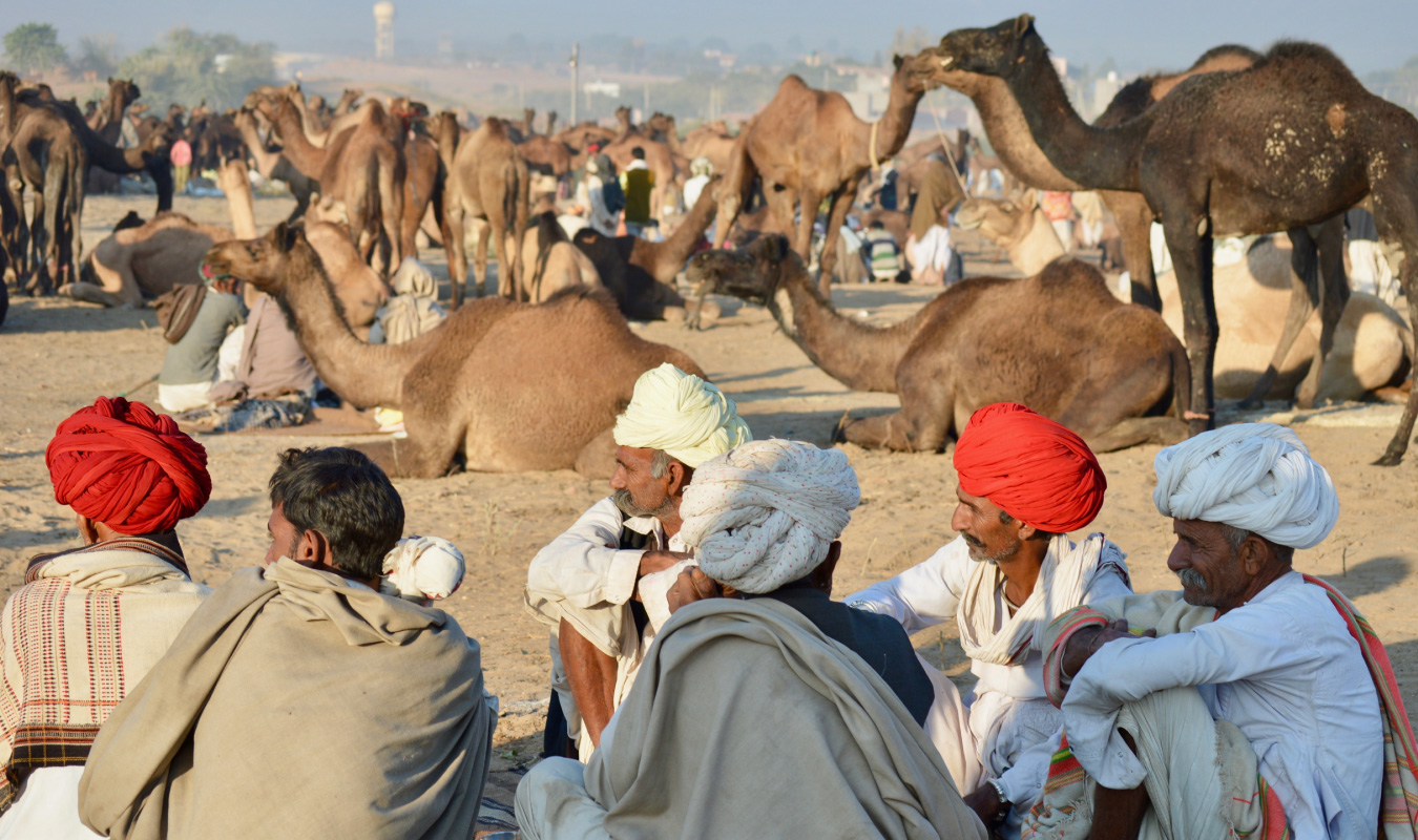 Pushkar Camel Fair with Golden Triangle India