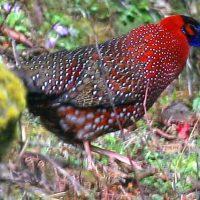 Western Bhutan Birding Tour