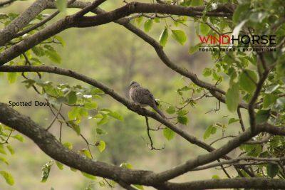 Birding, Nature & Wildlife Tour Across Bhutan (In Reverse)