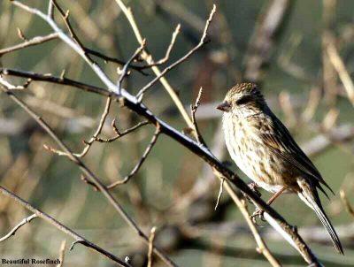 Birding, nature, Wildlife adventures in Mid -South Frontier.