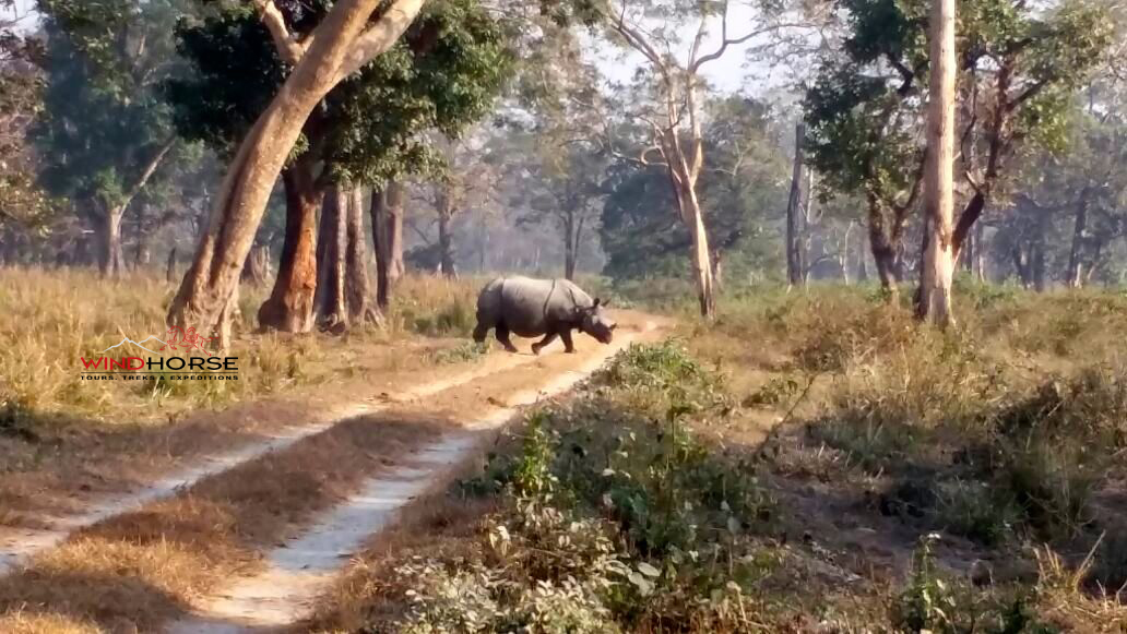 Assam's Wildlife, Wilderness & National Parks